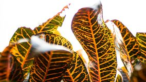 Зеленые и желтые лист завода стоковое изображение