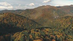 Зеленые и коричневые плотные леса покрывают холмы в осени сток-видео