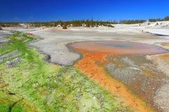 Зеленые и оранжевые водоросли, таз гейзера Norris, национальный парк Йеллоустон, Вайоминг стоковое изображение rf