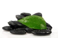 зеленые камни листьев стоковые фотографии rf