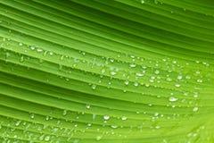 Зеленые картина и роса лист с абстрактной линией в предпосылке природы природа предпосылки зеленая стоковые изображения rf