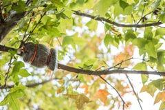 Зеленые кленовые листы в черной предпосылке bokeh Стоковое Фото