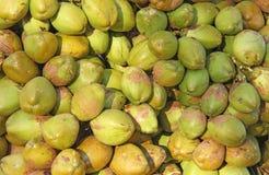 Зеленые кокосы, предпосылка Зеленая флористическая предпосылка кокосов Стоковая Фотография RF