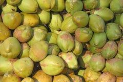 Зеленые кокосы, предпосылка Зеленая флористическая предпосылка кокосов Стоковые Фотографии RF