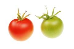 зеленые красные томаты стоковые изображения