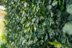 Зеленые кустарники для благоустраивать стоковые фото
