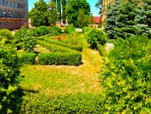 Зеленые кустарники лужайки с цветками приближают к зданиям Стоковое Изображение