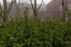 Зеленые кусты и дома красного кирпича Стоковое Изображение RF