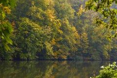 Зеленые лес и река Озеро лес Река пропускает среди деревьев Красивый вид природы Фото ландшафта зеленого леса стоковая фотография