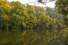 Зеленые лес и река Озеро лес Река пропускает среди деревьев Красивый вид природы Фото ландшафта зеленого леса стоковые изображения