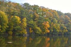 Зеленые лес и река Озеро лес Река пропускает среди деревьев Красивый вид природы Фото ландшафта зеленого леса стоковое фото rf