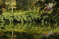 Зеленые лес и река Озеро лес Река пропускает среди деревьев Красивый вид природы Фото ландшафта зеленого леса стоковое изображение rf