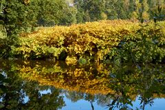 Зеленые лес и река Озеро лес Река пропускает среди деревьев Красивый вид природы Фото ландшафта зеленого леса стоковые изображения rf