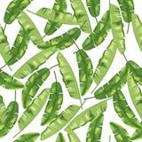 Зеленые листья банана на белой предпосылке картина безшовная вектор Стоковое Фото