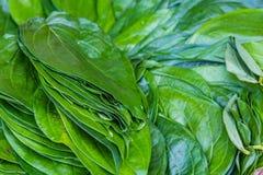 Зеленые листья бетэла Стоковые Изображения RF