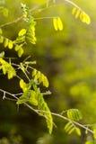 Зеленые листья в свете утра стоковая фотография rf