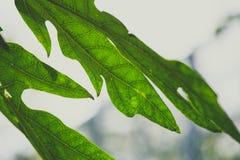 Зеленые листья в утре стоковая фотография rf