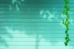 зеленые листья дерева границы природы Coatbuttons и завода тени на древесине цвета aqua стоковые изображения rf