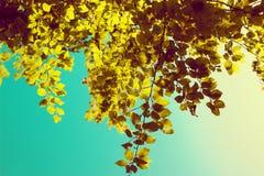 Зеленые листья дерева над голубым небом Стоковое Фото