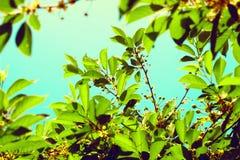 Зеленые листья дерева над голубым небом Стоковые Изображения RF