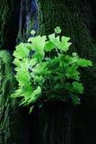 Зеленые листья загоренные солнечным светом стоковое изображение rf
