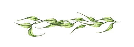 Зеленые листья и ветви изолированные на белой предпосылке Линия границы, лавры и рассекатель текста иллюстрация вектора