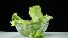Зеленые листья и вода салата Овощи падают в воду в замедленном движении органическая и полезная еда акции видеоматериалы
