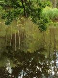 Зеленые листья и зеленая вода стоковое фото rf