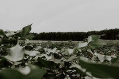Зеленые листья и лес стоковая фотография rf