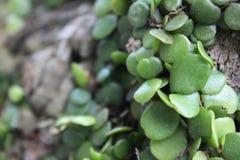Листья на дереве стоковые фотографии rf