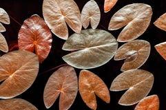 Зеленые листья лотоса или лилия воды от верхнего угла, картины природы стоковые фотографии rf