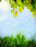 Зеленые листья на дереве Стоковое Изображение RF