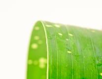 Зеленые листья одиночные с многоточиями и waterdrops Стоковые Изображения