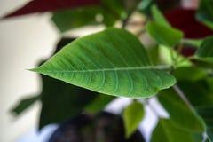 Зеленые листья сфокусировали крупный план стоковое фото rf