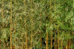 Зеленые листья с желтой текстурой стержней стоковые изображения rf