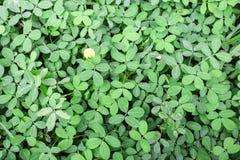 Зеленые листья с цветком Стоковое Изображение
