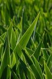 Зеленые листья цветка в backlight стоковое фото rf
