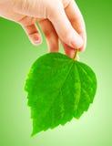 зеленые листья человека руки стоковая фотография