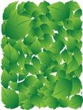 зеленые листья иллюстрация штока