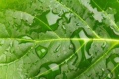 зеленые листья Стоковые Фотографии RF