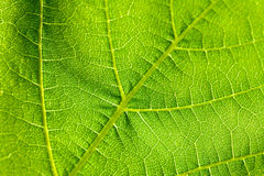 зеленые листья Стоковое Фото