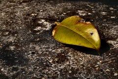 Зеленые лист и солнечный свет стоковые изображения rf