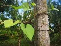 Зеленые лист на проволочной изгороди Стоковое Изображение