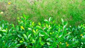 Зеленые лист под зеленым парком поля Стоковые Изображения