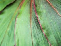 Зеленые лист при красный аранжированный край стоковое фото rf