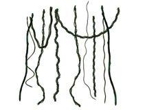 Зеленые лозы Стоковые Изображения
