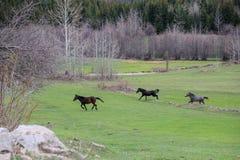 Зеленые луга, лошади, коровы, овцы Стоковое фото RF
