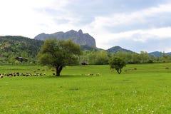 Зеленые луга, лошади, коровы, овцы Стоковые Фотографии RF