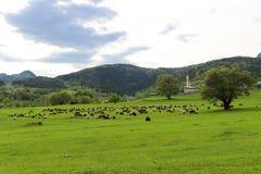 Зеленые луга, лошади, коровы, овцы Стоковое Фото