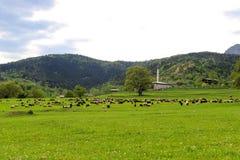 Зеленые луга, лошади, коровы, овцы Стоковая Фотография RF